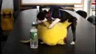 funny dog have sex with pikachu