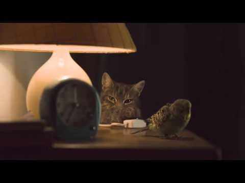 "Energia Cheaper Home Energy - ""Cheep-Purr"" TV Ad"