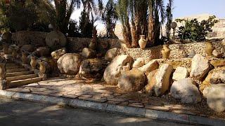 شجرة النخيل - اريحا
