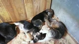 Нет ничего важнее, чем еда, для собаки, познавшей ужас голода.