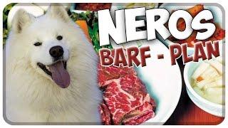 Nero's BARF-Plan! So wird Nero gebarft / gefüttert! Hund richtig barfen! Tipps!!