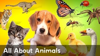 Learn All About Dogs, Bugs, Ducks And Cats