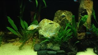 Beginner Aquarium Plants