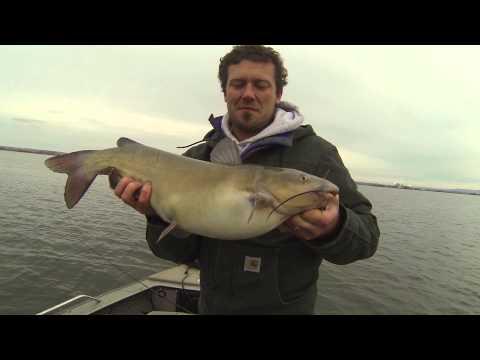 Columbia River Catfish