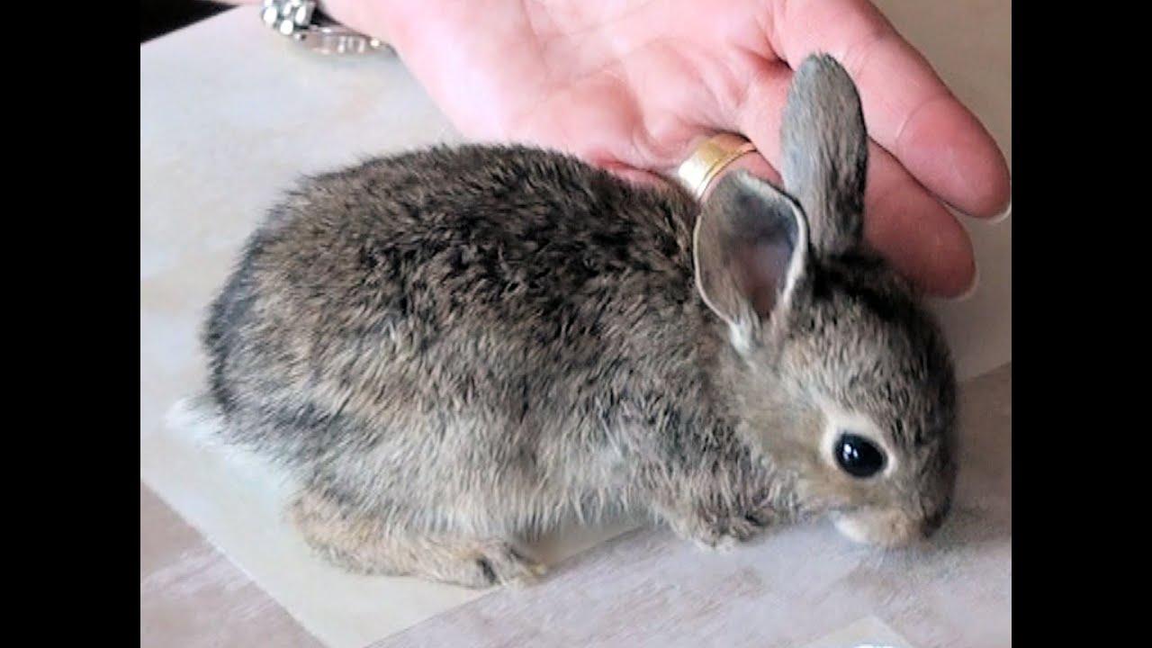Mi conejo es el mejor lesbian scene - 3 10