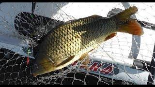 Рыбалка и удача, вот что происходило летом