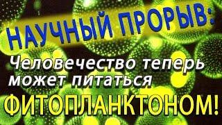 """SolarStrips - витаминно-минеральная """"бомба"""" из морского фитопланктона"""