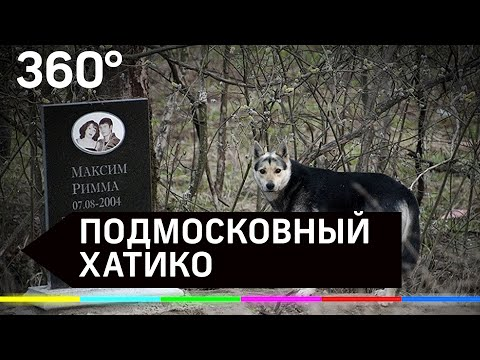 15 лет собака живёт у памятника погибшим хозяевам
