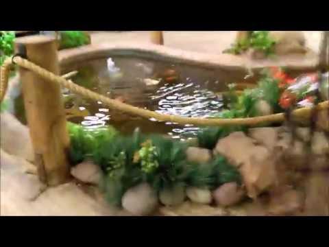 African cichlids and tour of phoenix AZ fish store