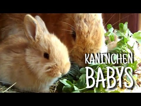 Bussys Kaninchenbabys 🐇🍼   Kaninchenstar
