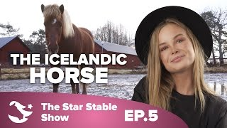 The Making of the Icelandic Horse | The Star Stable Show #1.5(Last episode: https://www.youtube.com/watch?v=DdI6GWPL9ds The gift shop: http://starstable.com/shop Like Star Stable on Facebook!, 2015-12-09T10:33:46.000Z)