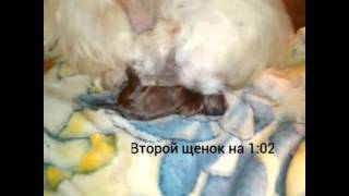 Первые роды собаки!
