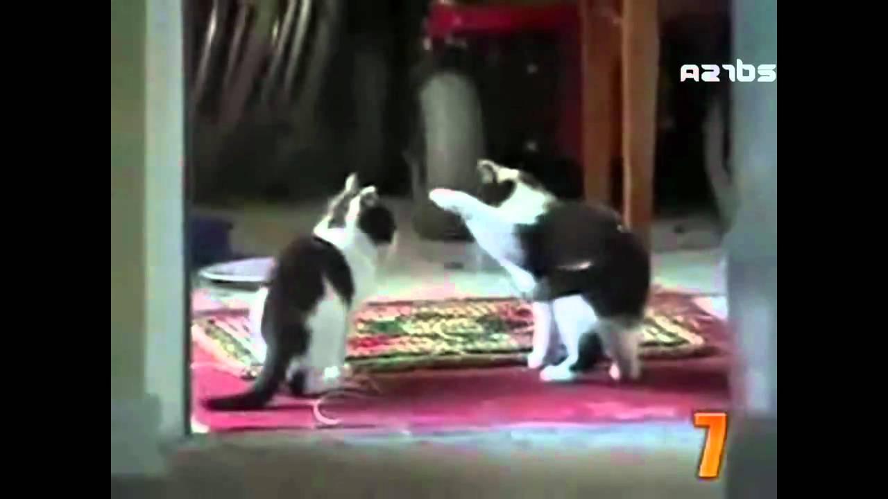 That Darn Cat Movie Youtube