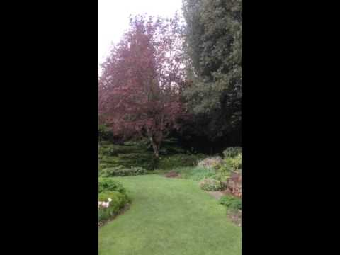 Bird song st the Secret Garden st Highclere Castle