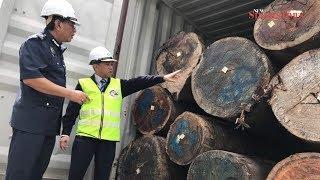 MTIB intercepts illegal shipment of round logs worth RM500,000