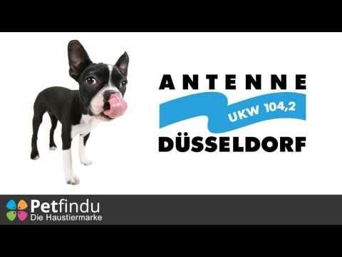 """Petfindu im Radio vorgestellt: """"Webseite der Woche"""" bei Antenne Düsseldorf"""