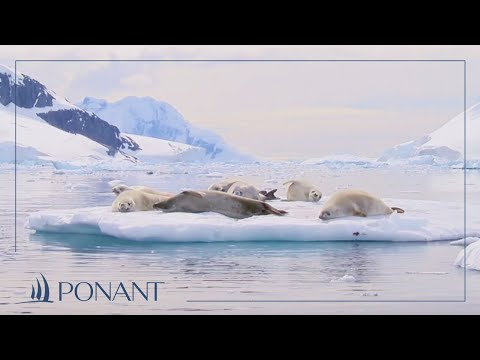 Our Antarctic cruises: magical PONANT moments in Wilhelmina Bay | PONANT