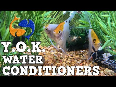 Prevent Fish/Aquarium Death! You Oughta Know About Water Conditioners!