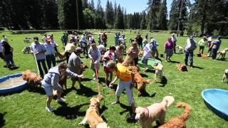 Harlem Shake (your Tail): 3000 Goldens Strong Against Canine Cancer