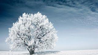 Charlotte North Carolina Snow Storm Shuts down city!