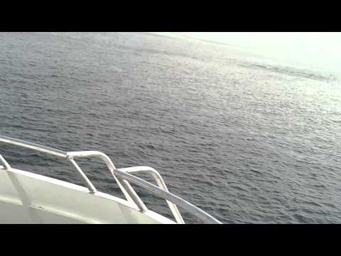 Whale watching off the coast of Plymouth Massachus