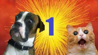 Śmieszne zwierzęta #1