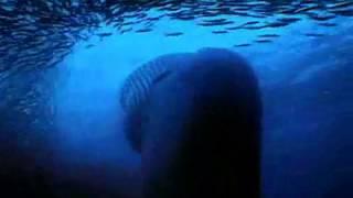 Tajemství oceánu (2003) - trailer