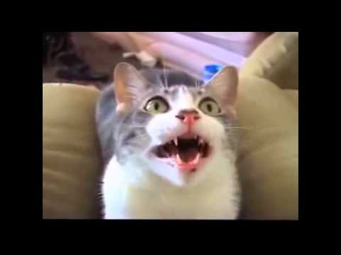 Funny Cats Compilation Funny Cat Videos Ever 2014