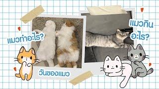 VLOG : 1day with cats รักแมวจังโว้ยยยย | ndmikkiholic ♡
