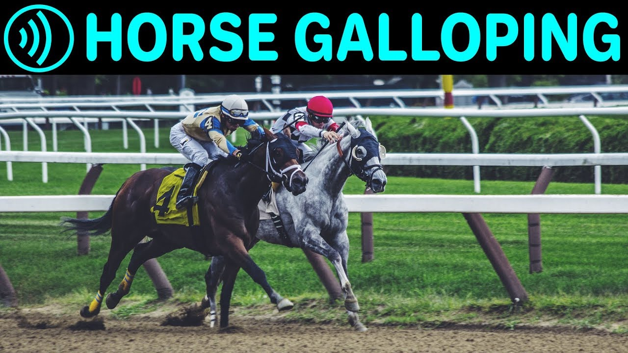 HORSE GALLOPING SOUNDS - Horse Running | Free Galloping ... - photo#19