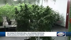 NH Senate passes bill allowing medical marijuana patients to grow their own