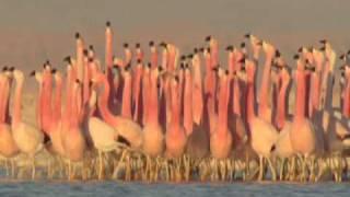 BIRDS ROCK! (heavy metal mix)