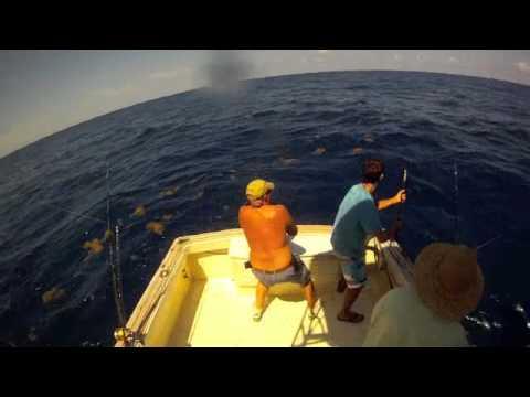 Bob Keiling's Big Dolphin