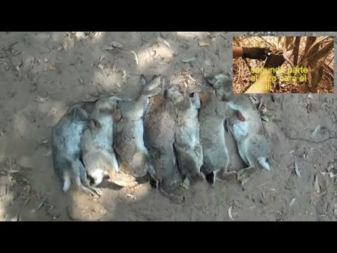 Supervivencia trampa de lazo para conejos caza y - Como cazar ratones en casa ...