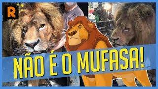 AS FOTOS DE REI LEÃO LIVE-ACTION SÃO FALSAS #RSM