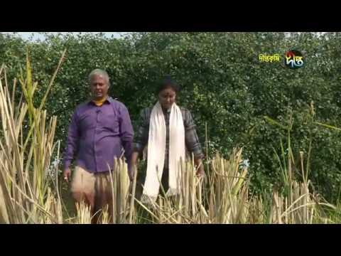 আপেল কুল চাষ করে আজ কোটিপতি বিস্তারিত পড়ুন