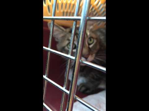 Kobe kitty who says 'hello'