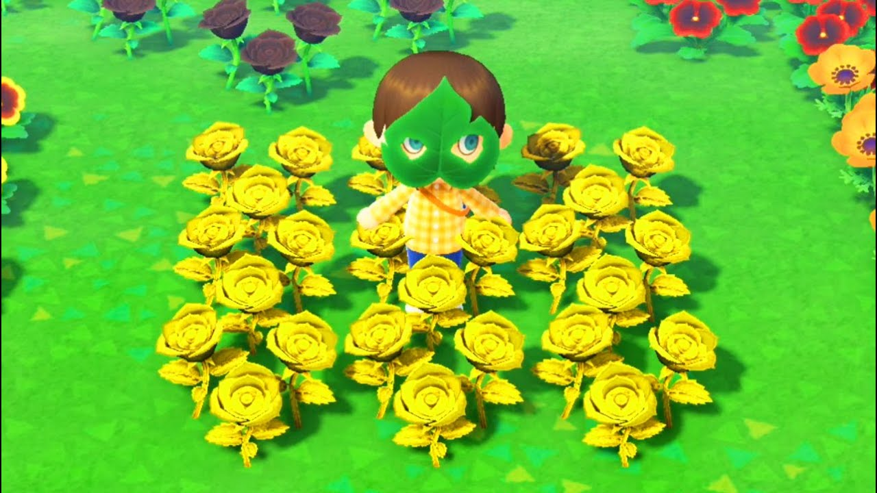When You Learn How To Grow Rare Gold Roses In Animal Crossing New