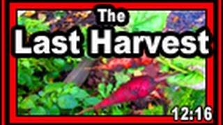 The Last Harvest - Wisconsin Garden Video Blog 741
