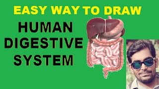 EASY WAY TO DRAW  DIGESTIVE SYSTEM OF MAN