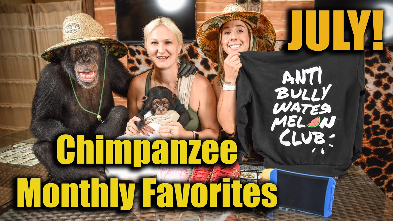 Chimpanzee Monthly Favorites of July | Myrtle Beach Safari