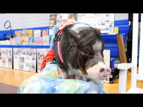 Farmer Minor & Daisy the Famous Pot Belly Pig Visit CHS!