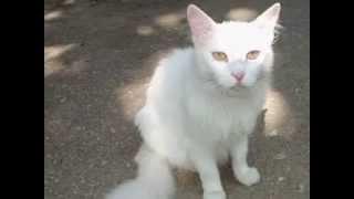 Парад белых котов