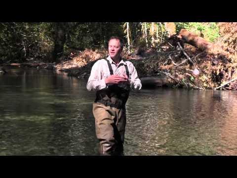 Jumpstarting Fish Habitat: The Story Of Still Creek