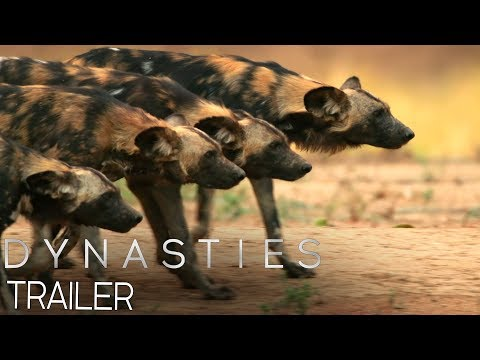 Dynasties:  Official Trailer #2 | New David Attenborough Series | BBC Earth