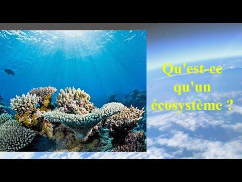 Quest Ce Quun écosystème Youtube