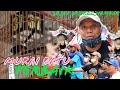Coba Dengarkan Materinya Asli Ngeri Murai Batu Jaiplo Launching Gantangan Bp Sujud Speed Ngerol  Mp3 - Mp4 Download