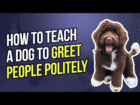 HOW TO TEACH A DOG TO GREET PEOPLE POLITELY