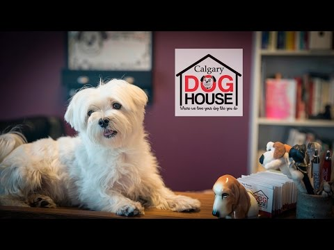Pet Sitting Calgary Dog House Dog Daycare