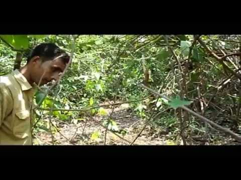 Panchalingeswar, Nilgiri, Chandipur, Kuldiha Forest, Devkund in Orissa. - Part 11